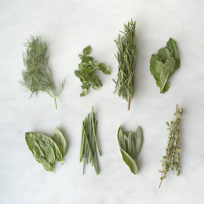 summer herbs on blank background